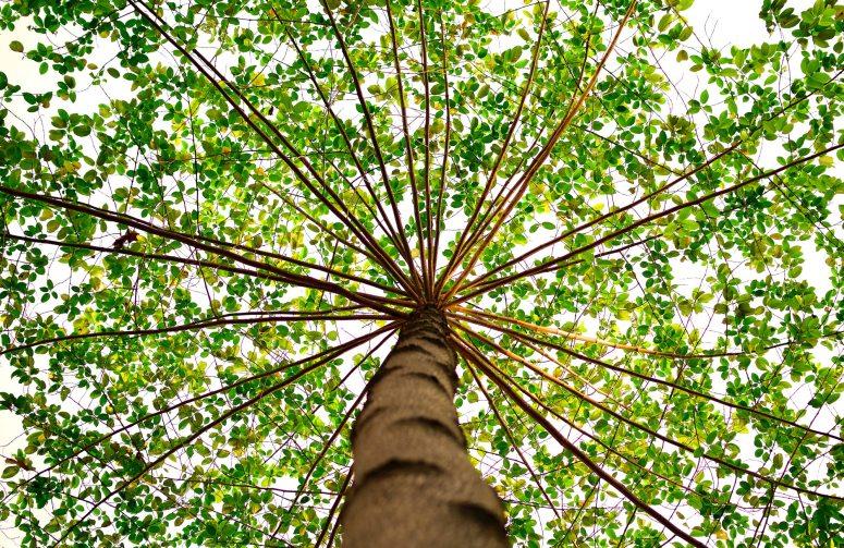 green-nature-tree-91153