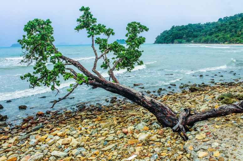 green tree beside seashore near green mountain